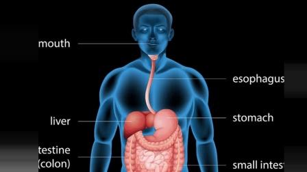 为什么人出生时, 身体左右就不对称? 和遗传基因有关系吗?