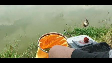 钓鱼: 看视频不迷惑, 野钓鲫鱼, 这几种漂像马上提竿, 100%能中鱼!