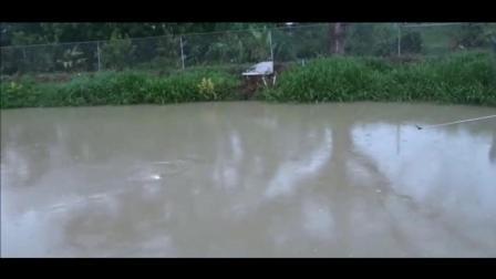 """钓鱼: 雨中玩台钓, 漂相清晰给力, 真应了""""轻风细雨好钓鱼""""!"""