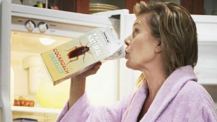 """""""蟑螂奶""""和牛奶一样吗? 你敢喝吗?"""