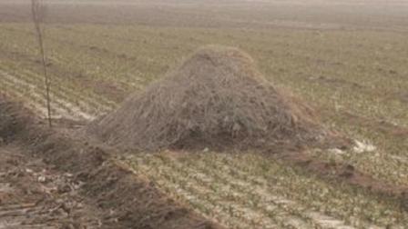 村民发现墓堆旁无半点积雪, 专家大胆推测, 结果不出所料!