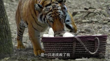 老虎想吃小孩, 看了一眼下不了口, 被恶心走了