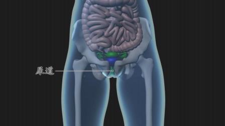女性尿道炎的症状有哪些, 快看自己有没有这些情况