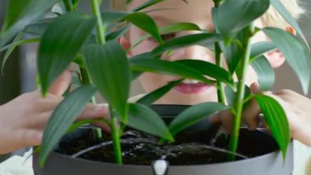 这款花盆可以养7000种植物, 草药、茶、花、都可以种植!