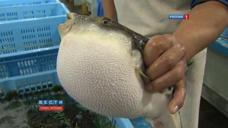 日本厨师现场处理河豚, 日本料理生吃河豚鱼片风险日本美味英文版