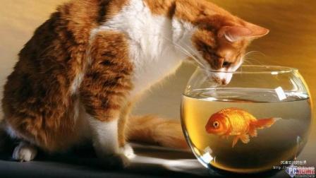 搞笑动物合集: 这些宠物要成精了吗? 再也不说他