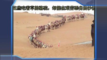 陕西宁夏自驾游(13)腾格尔沙漠东南边缘的绿洲黄河沙坡头