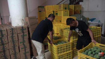 四哥体会果农打包发货, 1万1千斤整理到半夜, 真心不容易