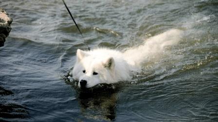 为什么狗狗天生就会游泳? 看完解开多年疑惑