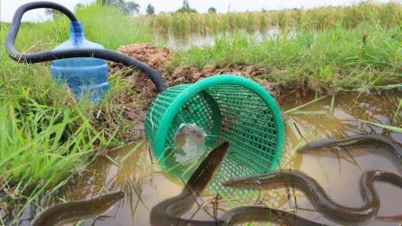 农村小姑娘捕鱼, 看这捕鱼方式也是没谁了, 收获还特别丰盛哦