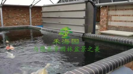 国外专业的锦鲤池