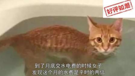 家里的水费越来越多, 安装摄像头后才发现, 自己可能养了只假猫