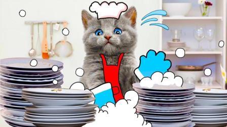 猫咪混的太惨了,一天要做这么多家务!