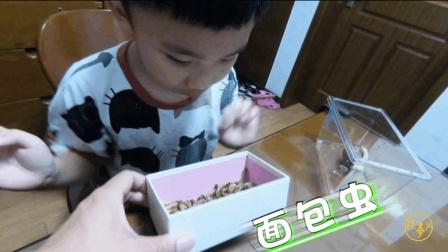 孩事儿: 给孩子送的礼物是虫子会怎样? 这反应服了!