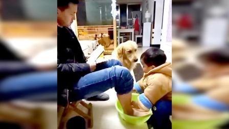 看到小主人在给主人洗脚 狗狗接下来做的太感人了