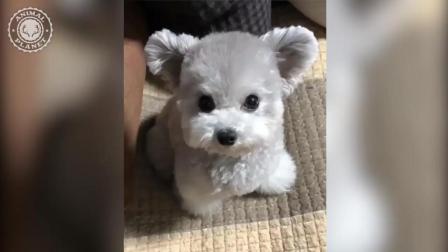 超可爱狗狗视频集锦, 一次宠翻你