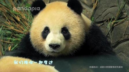 大熊猫奥利奥: 奥莉奥4岁生日歌, 奥胖生日快乐哟!