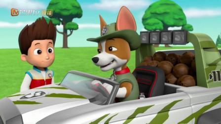 汪汪队立大功4: 狗狗们在草地上开心喝着小特从森林运来的椰子