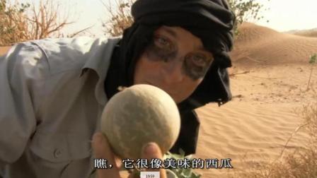 """贝爷发现沙漠""""西瓜"""", 有毒不能吃, 却还有其他神奇功效!"""