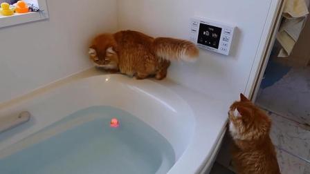 主人为了让猫咪洗澡, 想出这一妙招, 真是好奇心害死猫!