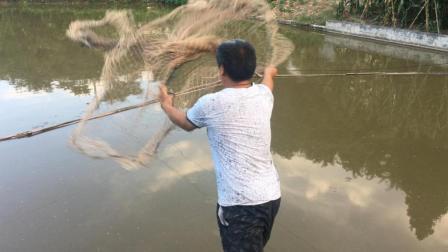 农村自家有鱼塘就是方便, 想吃随时撒网, 健康好吃又新鲜