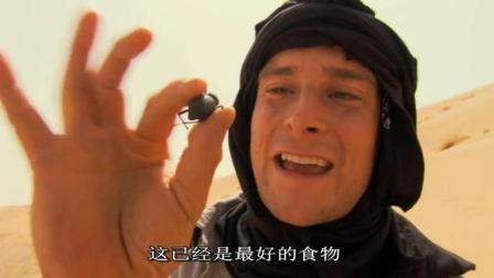 贝爷手里的小家伙, 可是撒哈拉沙漠最好的食物了!