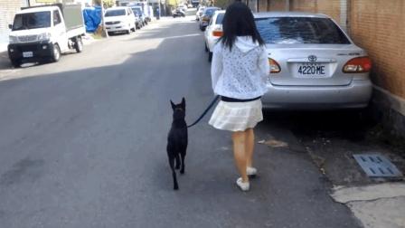如何训练狗狗随行遛狗, 简单三招教你学会