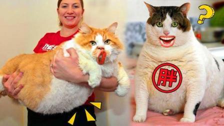 终于知道猫为什么这么胖了!
