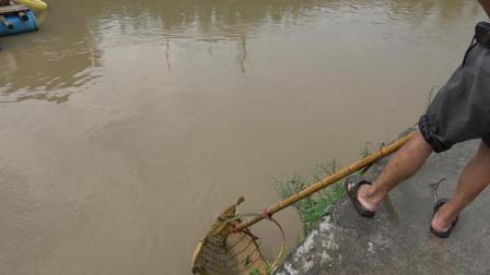 湖南农村有一种野生河鱼, 40元一斤, 当地的人很喜欢吃, 你见过吗