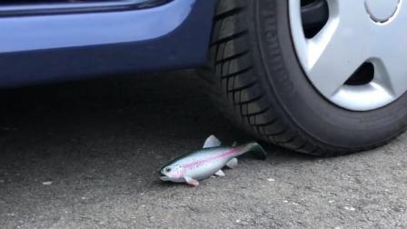 把一条鱼放到汽车下, 你猜鱼能挡住汽车的碾压吗? 一起来见识下!