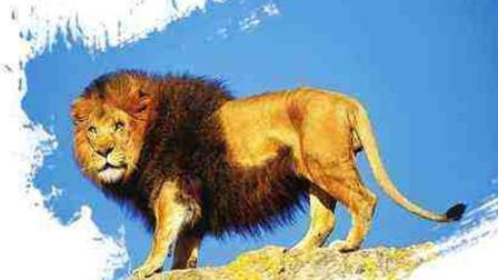 从没见过如此恐怖的狮子