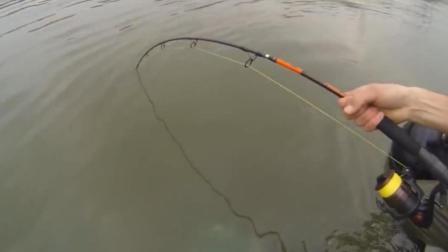 鱼太大鱼竿始终提不起来, 感觉马上就要断竿了!