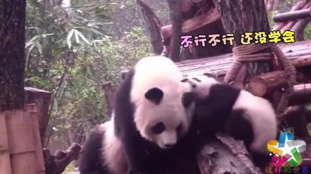 熊猫团子的坑妈之旅