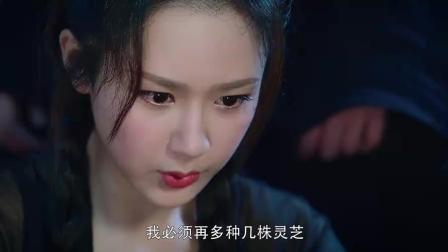《香蜜沉沉烬如霜》旭凤护妻狂魔上线倔强杨紫, 邓伦一个反手公主抱