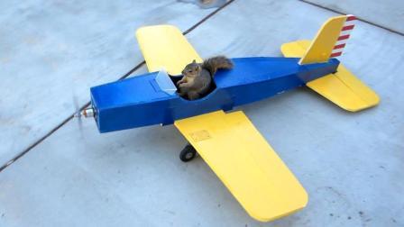 松鼠偷开飞机, 在天空中花式飞行, 网友: 松鼠精!