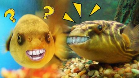 神相似! 龅牙鱼和小伙竟撞脸!