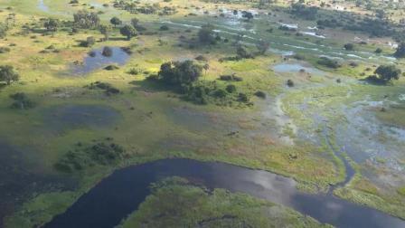 航拍非洲草木茂盛的热带沼泽地, 是非洲面积最大、风景最美的绿洲
