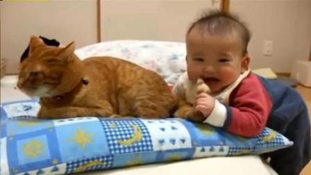 小宝宝咬猫咪的尾巴, 猫正要发火, 回头一看气消了