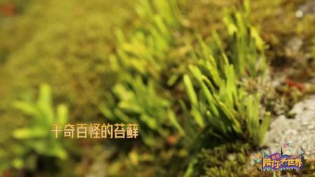 真想陪你看世界彩蛋之箱根美术馆