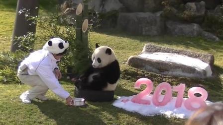 熊猫宝宝在日本迎来第一个生日, 整个熊猫基地为国宝庆生, 简直是太幸福了