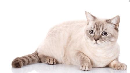 抖音上非常吃香的两只猫, 当猫会讲人话, 就确定成精呢