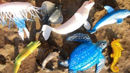 认识大白鲸等9种海洋动物, 媛媛识动物