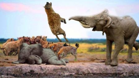 草原上的母象保护小象不被鬣狗欺负