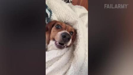 日常中狗狗捣蛋失败搞笑视频集锦