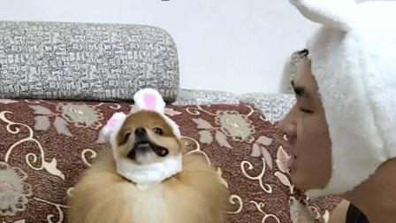 主人和狗狗互相嫌弃对方长得难看, 谁都不服谁, 场面差点失控