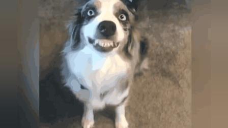 让你捧腹大笑的狗狗, 尴尬的瞬间