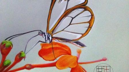 彩铅画基础入门视频教学—蝴蝶的绘画技巧