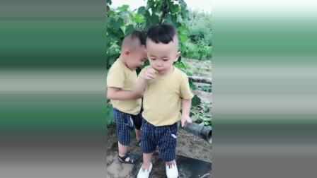 双胞胎宝宝到葡萄树摘葡萄, 接下来宝宝们的反应太可爱了!