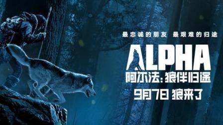《阿尔法: 狼伴归途》定档9月7日! 这次狼来了!