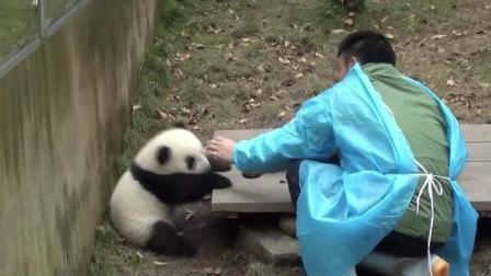 么么儿独受奶爸专宠, 其他熊宝宝掉地上了奶爸都不去捡起来